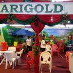 Marigold Plastic Furniture Nepal